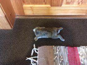 Poor wittle wabbit